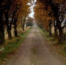 Road through Autumn leaves