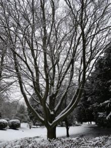 Aston Hall Tree