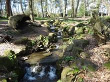 Stream in Trentham Gardens